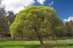 Stock Photo of springtime tree