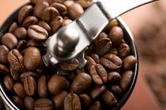 roasted coffee beans in coffee grinder - stock photo