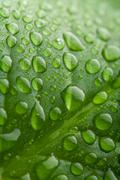 fresh green leaf with water droplets - stock photo