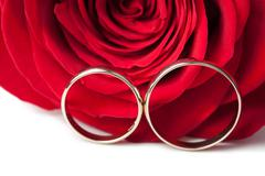 gold wedding rings and red rose isolated - stock photo