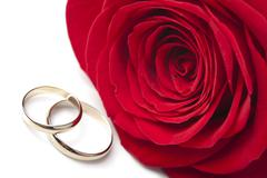 golden wedding rings and red rose isolated - stock photo
