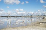 Stock Photo of dead trees in a salt lake