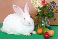 easter bunny, flowers and colored eggs - stock photo