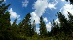 Trees timelapse Stock Footage