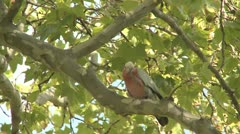 Parrot in Park Stock Footage