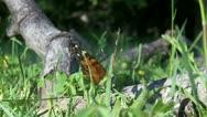 ButterflyOnFallenTree.1.PJ.1080 Stock Footage
