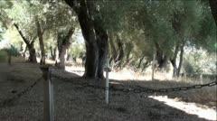 Old Cemetery, Graves, Crosses, Oak Trees Stock Footage