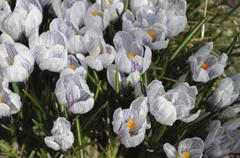 the group of spring flowers - stock photo