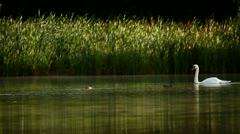Water birds Stock Footage