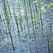 Rain on pond Stock Photos