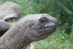 AFRICAN TORTOISE Kenya, Africa - stock photo