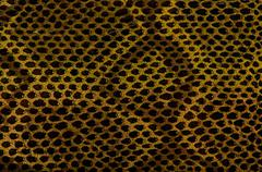 Snake skin leather texture Stock Photos