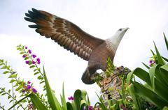 langkawi eagle - stock photo