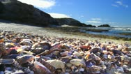 Shells on Beach HDR GFHD Stock Footage