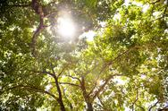 Stock Photo of tree canopy