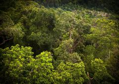 jungle landscape - stock photo