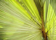 Stock Photo of palm leaf background