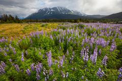 alaska landscapes - stock photo