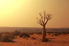 Namib Stock Photos