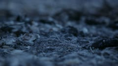 Ashes and feathers Stock Footage