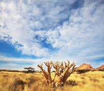 African mountains and baobab Stock Photos