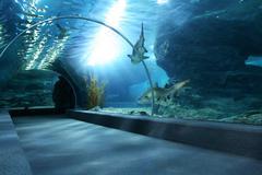 tourist in big aquarium - stock photo