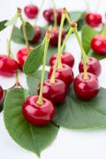 Small group cherry on a petal Stock Photos