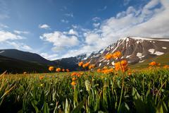 Stock Photo of mountains meadow