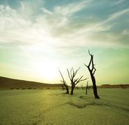 namib - stock photo