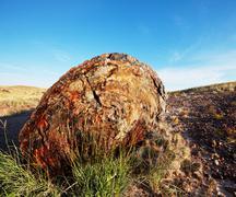 Petrified tree in usa Stock Photos