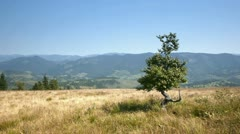 Beautiful Carpathian landscape with a tree on the edge of the mountain Stock Footage