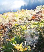 spiderweb on the grass - stock photo