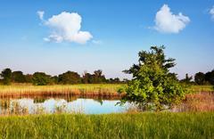 Stock Photo of summer lake