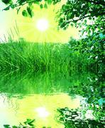 sunny meadow - stock photo