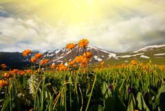 aurinkoisella niityllä - stock photo