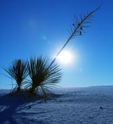 Stock Photo of white desert