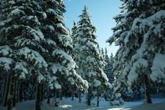 Winter forest in mountains Stock Photos
