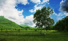 Green landscapes on kamchatka Stock Photos