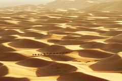 caravan in sahara desert - stock photo