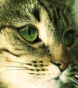 cats portrait close up - stock photo
