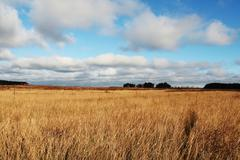 yellow field and white clouds - stock photo