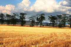 Stock Photo of field and trees
