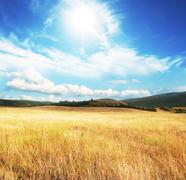 field in sunny light - stock photo