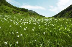 Summer green grassland Stock Photos