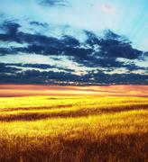 Yellow grassland Stock Photos