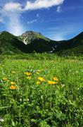 Summer green grassland in mountain Stock Photos