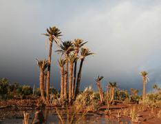 palm-tree - stock photo