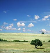 Summer field - landscape green grass, blue sky and white clouds Stock Photos