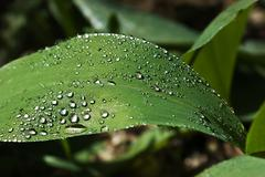 drops on green leaf - stock photo