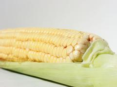 Cob fresh corn Stock Photos